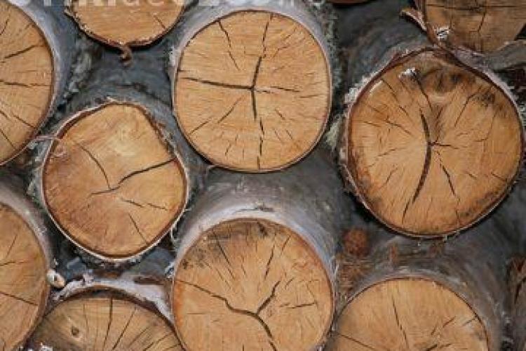Polițiștii au confiscat aproape 500 metri cubi de lemne în urma unei razii la o firmă clujeană