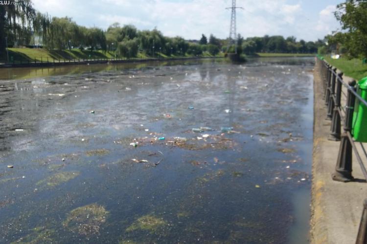 Un utilaj amfibiu va curăța vegetația pe râul Someş și în lacurile de acumulare - FOTO