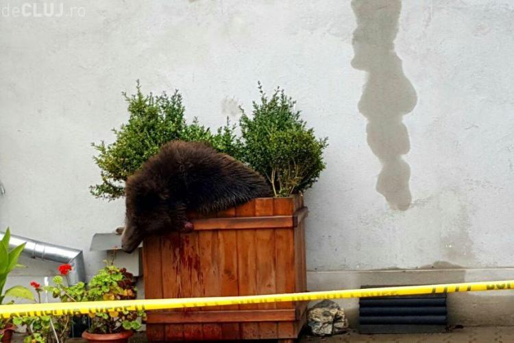 Klaus Iohannis a criticat intervenţia în cazul ursului din Sibiu