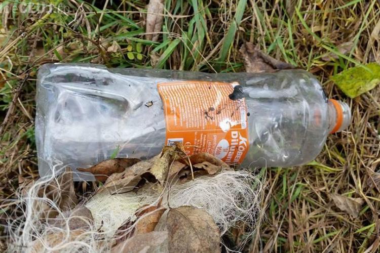 Cluj - Au dat foc unui câine pe malul Someșului. Se caută VINOVAȚII - FOTO