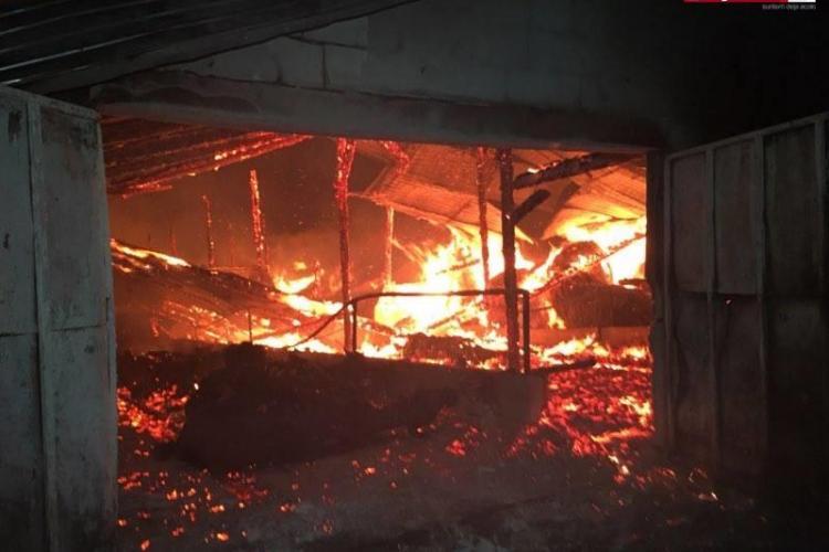 CLUJ: Incendiu puternic la o fermă de vaci. Mai multe animale au ars de vii VIDEO