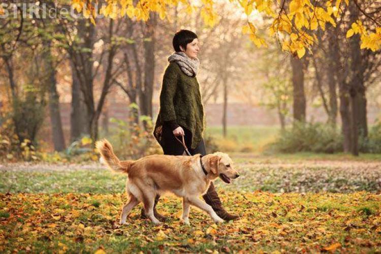Cluj-Napoca: Sancțiuni pentru proprietarii de câini