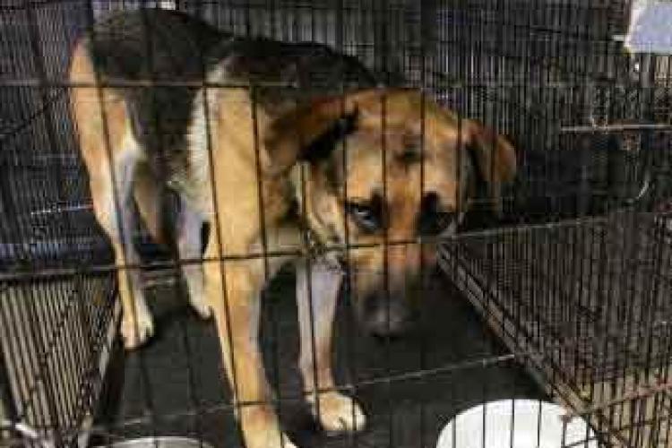 Cluj: Câinii de la Centrul de ecarisaj riscă să înghețe de frig. Sistemul de încălzire s-a stricat de la Crăciun
