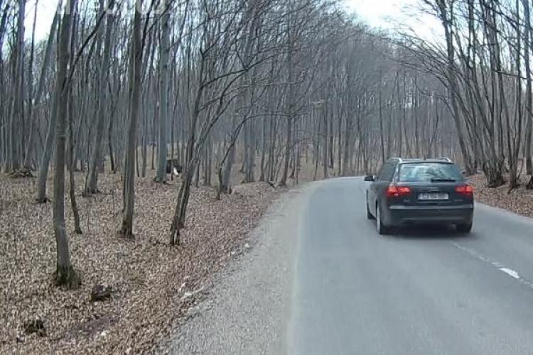 Clujean aproape lovit de mașină în timp ce alerga prin Făget: O să depun plângere la Poliție FOTO/VIDEO