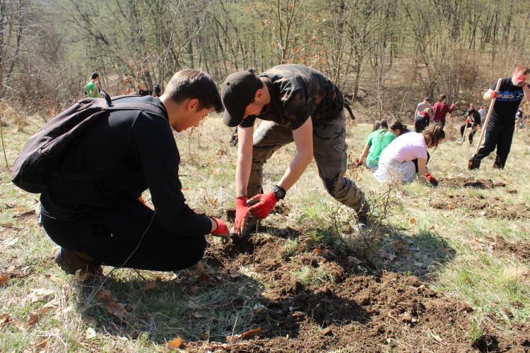 CLUJ: Aproape 1.500 de copaci plantați în weekend la Țaga FOTO
