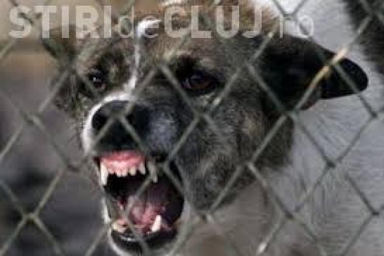 CLUJ: Copil de 8 ani, sfâșiat de câini de pază. Poliția a deschis un dosar penal