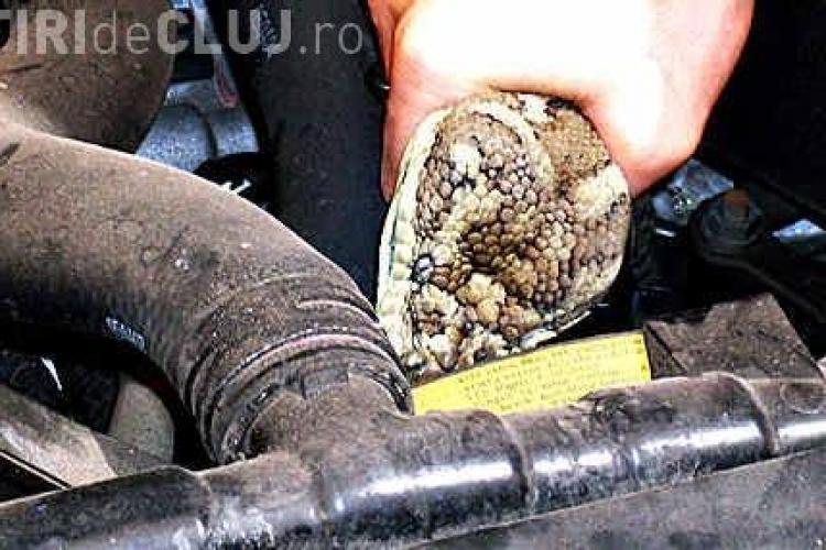 O clujeancă s-a trezit cu șarpele în mașină, lângă lacul din Gheorgheni