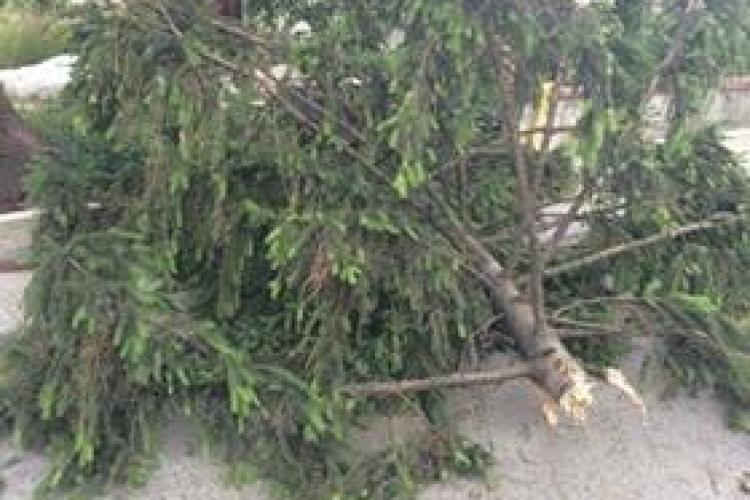 Vântul a doborât copaci în Cluj-Napoca - VIDEO