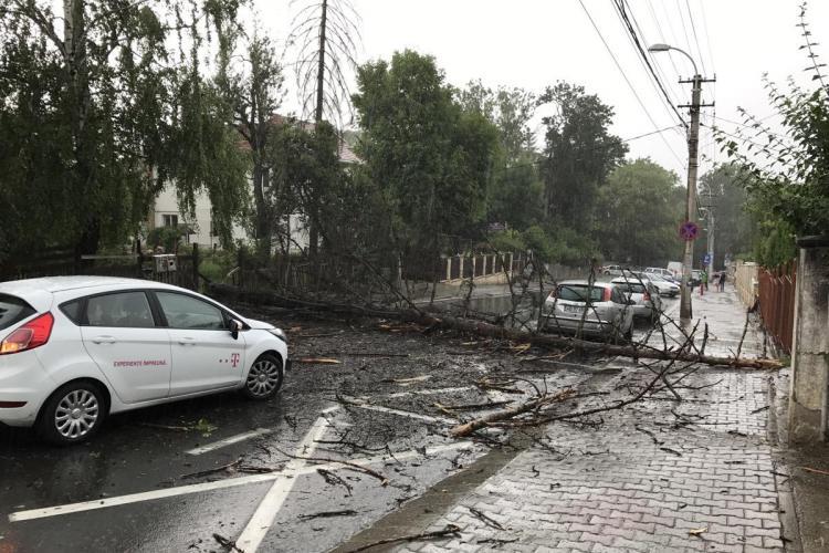 Circulația blocată pe strada Republicii, din Cluj-Napoca. Un copac a căzut pe stradă FOTO