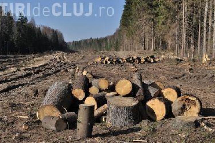 Romsilva susține că scad tăierile ilegale din pădurile din România