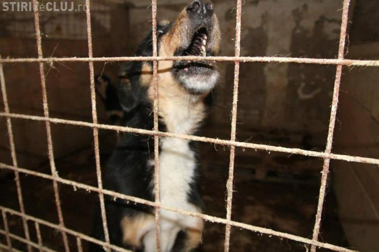 Cluj: Descindere la adăpostul cu 1000 de câini a lui Radu Țermure - VIDEO