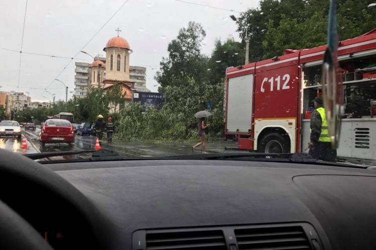 Trei copaci au fost doborâți de furtună pe strada Plopilor - FOTO