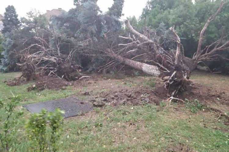 Furtuna care a lovit Clujul nu a făcut victime. În schimb a înroșit liniile 112! - VIDEO
