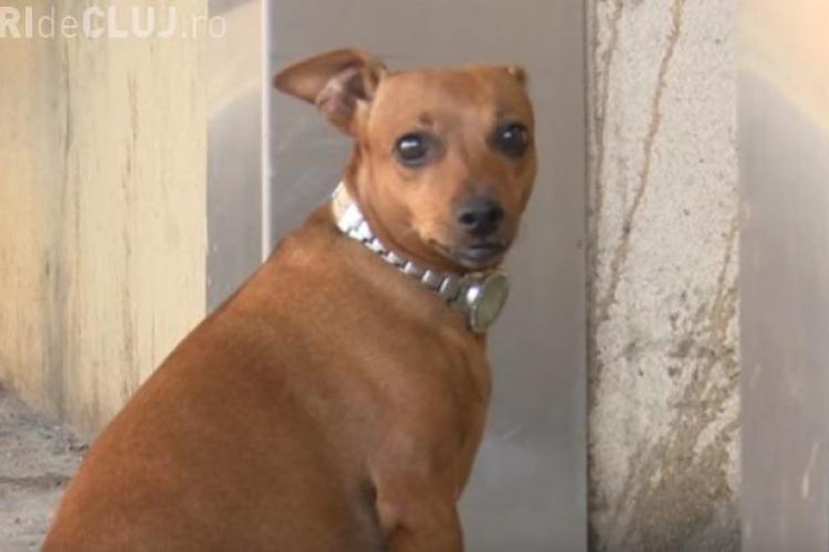 O cățelușă și-a așteptat câteva ore stăpânul la ușa spitalului - VIDEO