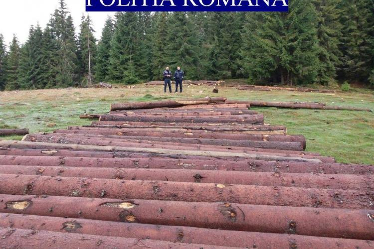 """CLUJ: Hoții de lemne au profitat de furtuni pentru a fura copaci. Un pădurar era implicat în """"afacere"""" FOTO"""