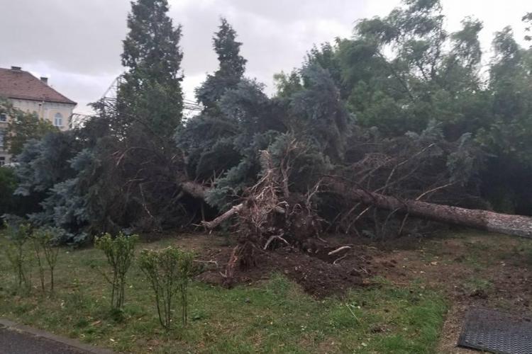 Trei brazi doborâți de furtuna de la Cluj - FOTO