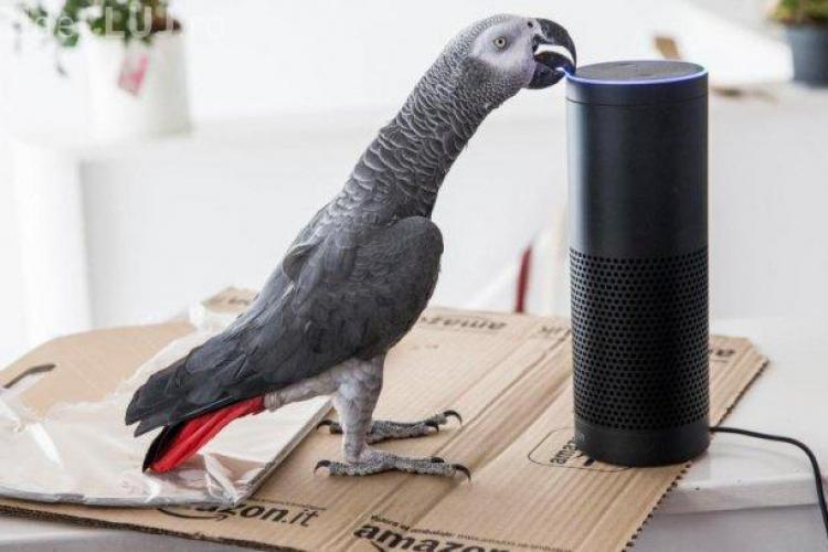 Un papagal a plasat o comandă pe Amazon