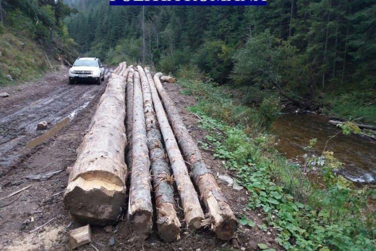 Lemn de peste 16.000 de lei, confiscat de polițiștii clujeni. A fost tăiat și abandonat în pădure FOTO