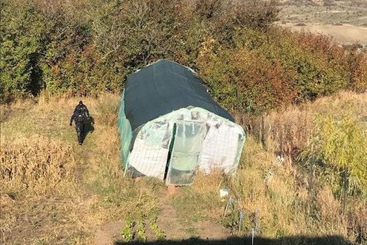 Fermă de cannabis descoperită la Cluj. Trei persoane reținute - VIDEO