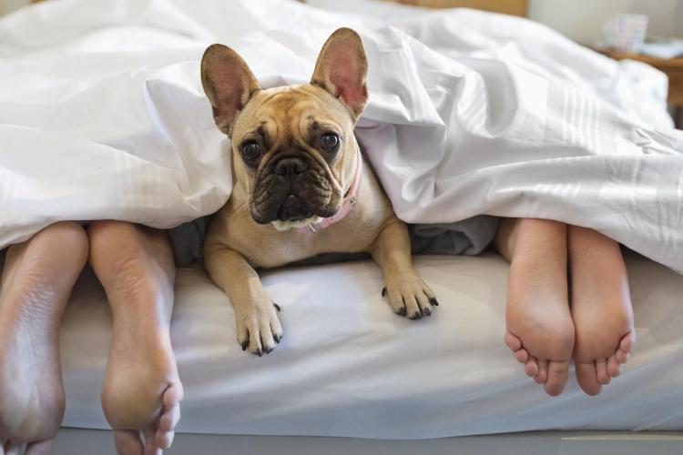 Cât de bine este să dormi cu animalele de companie în pat