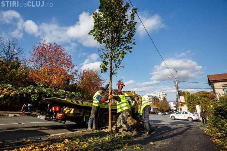 Acțiune amplă de plantare de copaci în Cluj-Napoca. S-au plantat primii 70 de arbori FOTO