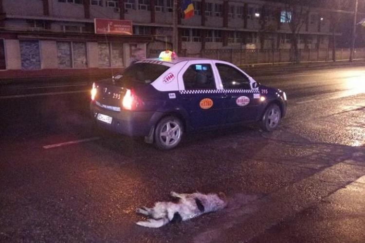 Cluj-Napoca: Taximetrist fără inimă. A călcat un câine și a dat înapoi pentru a-l mai călca o dată