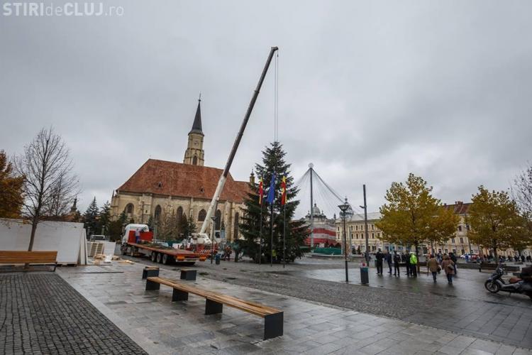 Brad de Crăciun de 17 metri în centrul Clujului. A fost donat de o femeie din cartierul Gheorgheni FOTO