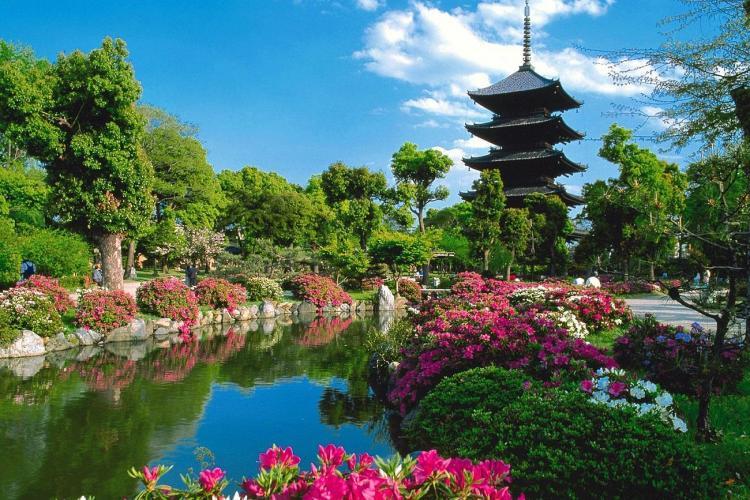 Elevi clujeni în vizită în Japonia! Mai țineți minte japonezii care au curățat un parc din Cluj-Napoca?