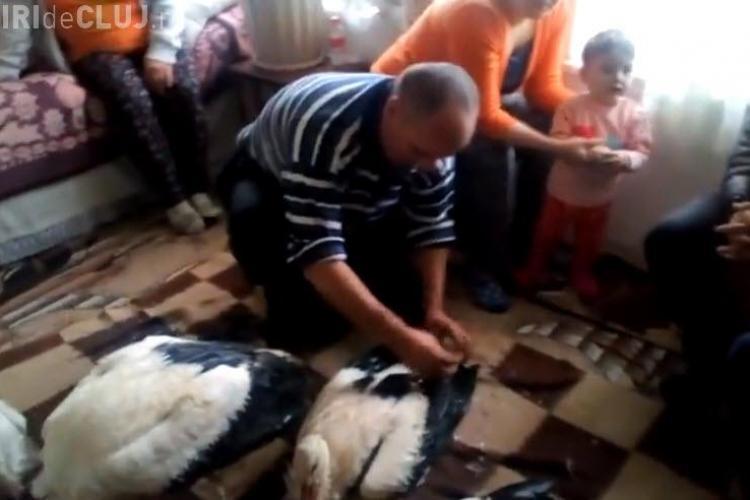 Românii au salvat berzele de la îngheț. Gestul este făcut de o familie sărmană, dar cu suflet - VIDEO