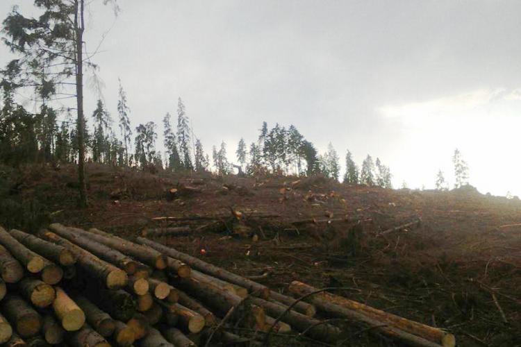 Pădurile de la Mărișel dispar de la un an la altul - FOTO
