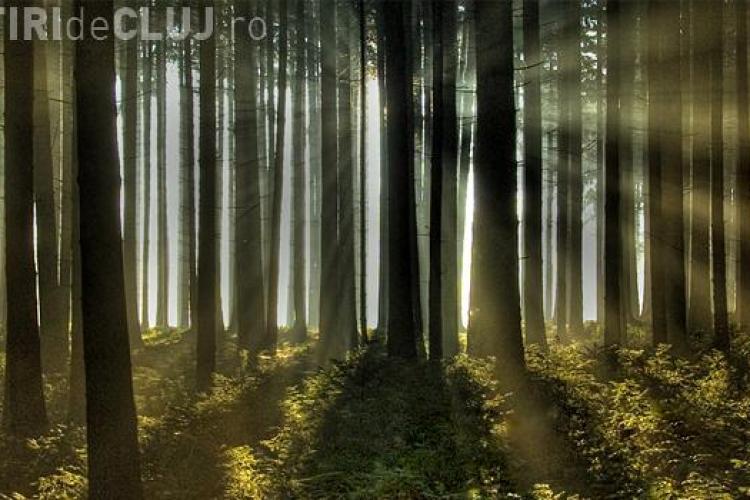 ROMSILVA se plânge că se taie prea puține păduri