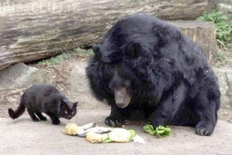 O pisica si un urs sunt cei mai buni prieteni - FOTO