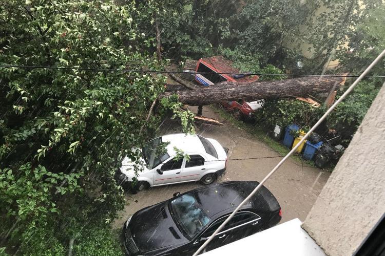VIJELIE la Cluj: Un brad a căzut peste o casă - FOTO