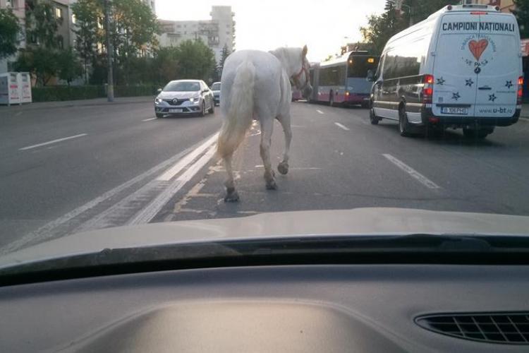 Surpriză în trafic la Cluj. Un cal se plimba nestingherit printre mașini, în Zorilor FOTO