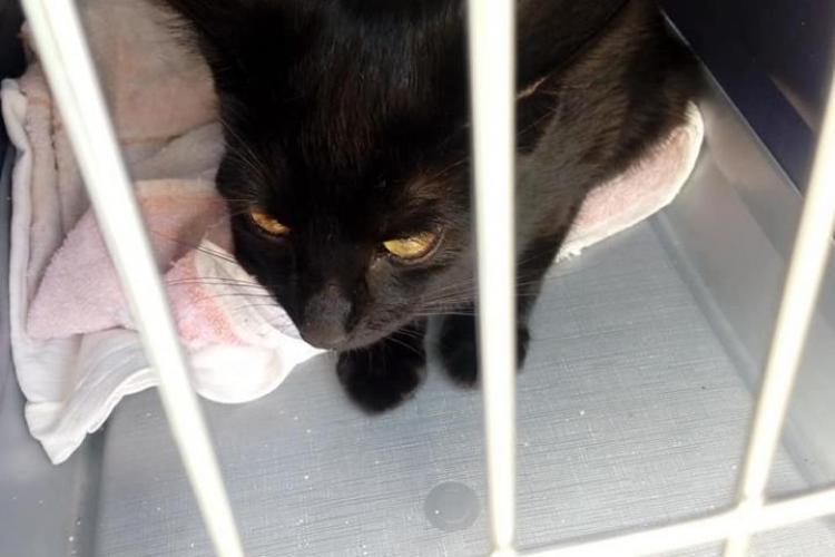 Clujeancă amendată în autobuz pentru că pisica din cușcă nu avea bilet - FOTO
