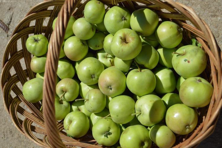 Care mere sunt mai sănătoase, cele verzi sau cele roșii