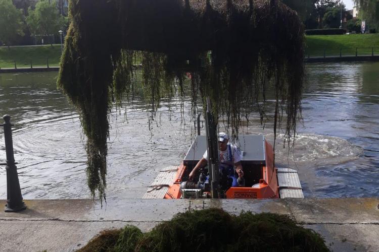 Peste 30 de tone de vegetație colectate de pe Someșul Mic, la Cluj
