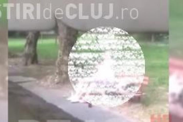 """Dosar penal în cazul cuplului care făcea sex oral în parc la Dej. Polițiștii îi caută pe """"iubăreți"""""""