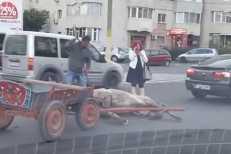 Accident! Un cal a fost lovit de o mașină - FOTO