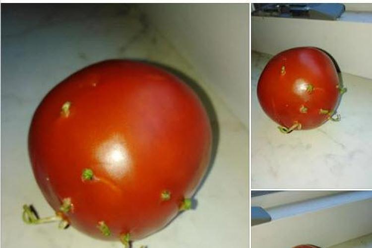 Un clujean a făcut un experiment cu roșii made în Germania. Au încolțit și nu s-au stricat - FOTO