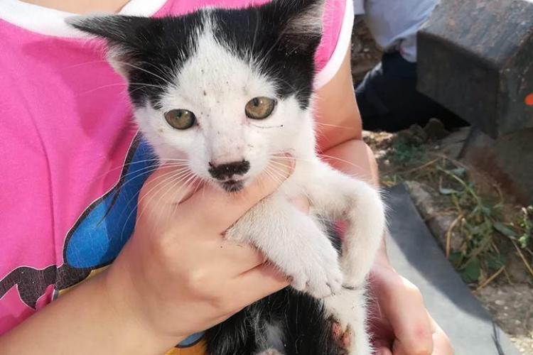 Pui de pisică salvat de clujenii cu inimă! Pompierii au refuzat să se deplaseze - FOTO