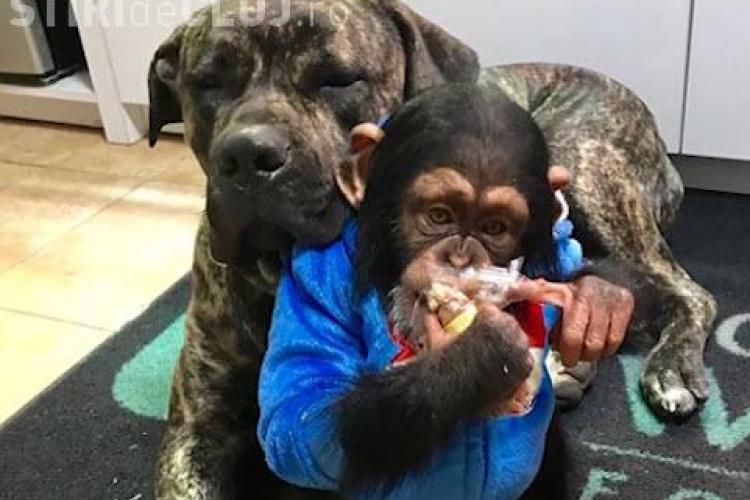 Limbani și Bruno sunt cei mai buni prieteni - VIDEO