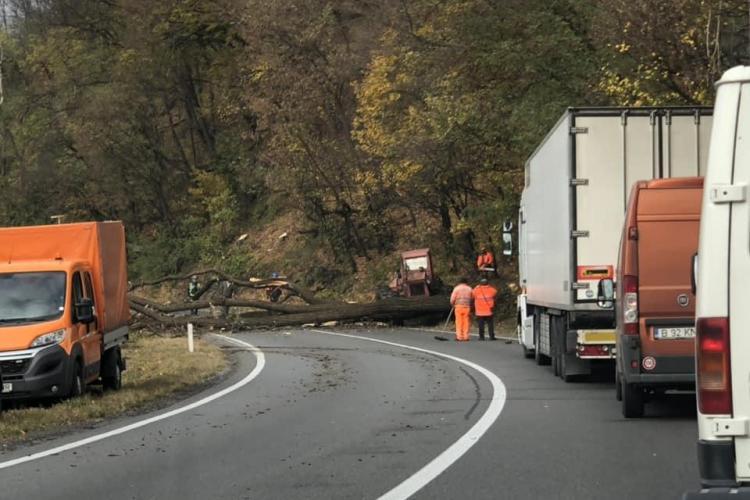 Trafic blocat pentru aproape două ore pe un drum din Cluj, din cauza unor copaci căzuți pe șosea FOTO