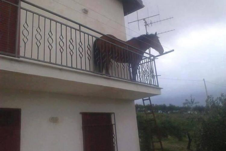 """Prințul din povești și-a """"parcat"""" calul direct în balcon - FOTO"""