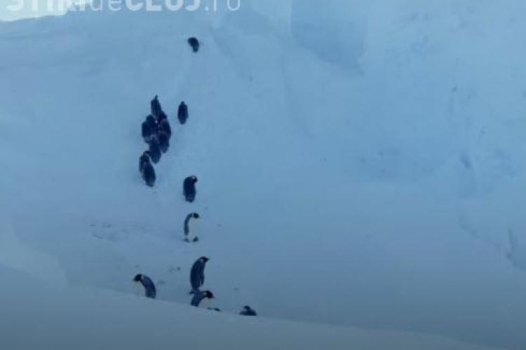 Imagini INCREDIBILE din natură! Cameramanii au intervenit și au salvat pinguinii - VIDEO