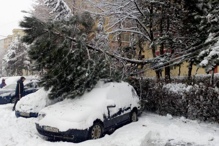 Arbori căzuți pe autoturisme la Cluj, din cauza zăpezii - FOTO