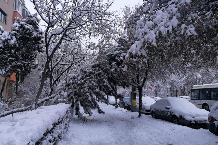 Un brad de pe Bulevardul Nicolae Titulescu s-a prăbușit sub presiunea zăpezii - FOTO