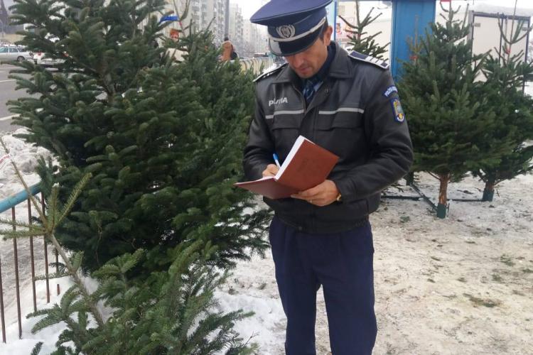 Sute de brazi de Crăciun, confiscați la Iara! Razie și în Mănăștur - FOTO