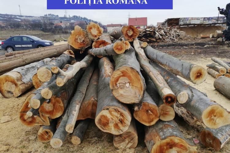 Firme amendate cu zeci de mii de lei pentru nereguli privind comerțul cu lemn FOTO