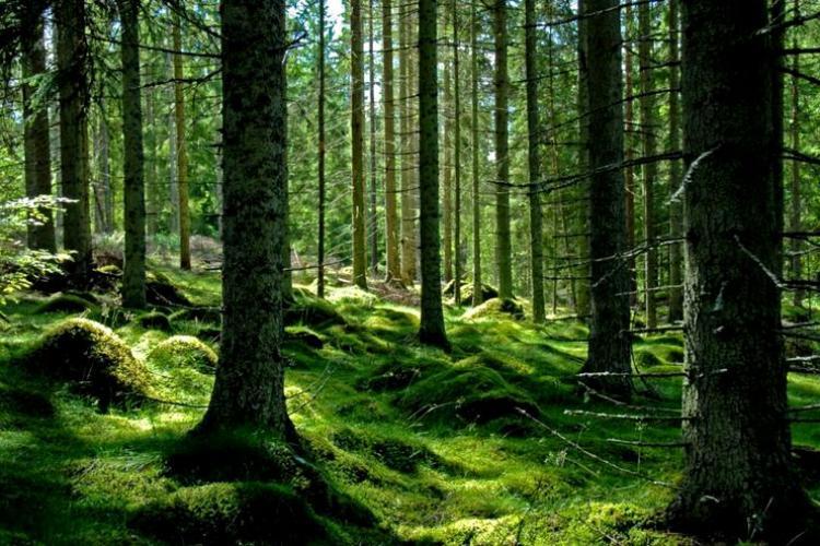 PSD ar dori să doneze Bisericii Ortodoxe 10% din pădurile României